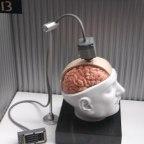 Interfaz cerebro-computadora – la nueva tecnología en aumento