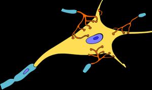 biology-1295127_640