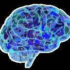 Drogas, recompensa y el cerebro