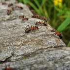 Ants, Humans, and the Lessons of War